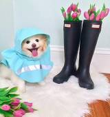 Charles River Rain Jackets For Your Dogs
